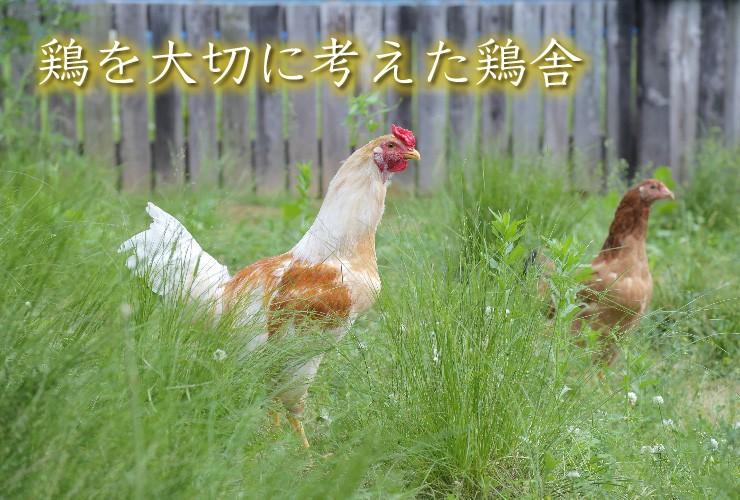 陽光が降り注ぐ風通しの良い鶏舎と、自然環境に近い屋外運動場で放し飼いにしています。