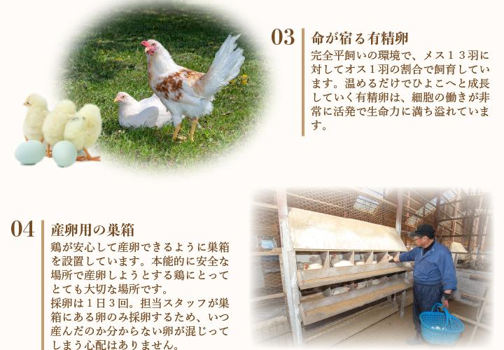 命が宿る有精卵。完全平飼いの環境で、メス13羽に対してオス1羽の割合で飼育しています。温めるだけでひよこへと成長していく有精卵は、細胞の働きが非常に活発で生命力に満ち溢れています。産卵用の巣箱。鶏が安心して産卵できるように巣箱を設置しています。本能的に安全な場所で産卵しようとする鶏にとってとても大切な場所です。採卵は1日3回。担当スタッフが巣箱にある卵のみ採卵するため、いつ産んだのか分からない卵が混じってしまう心配はありません。
